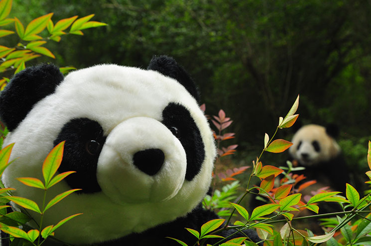 China_Chengdu2012_6201