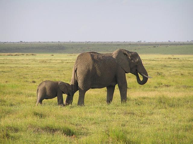 elephant-289300_640