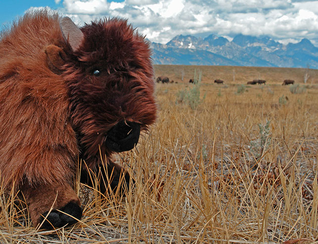 hannah-bison-cu
